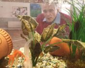 Fish at The Firs Residential Nursing Home in Taunton