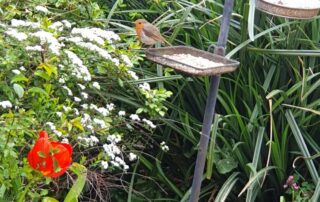 Robin at The Firs Care Home in Taunton